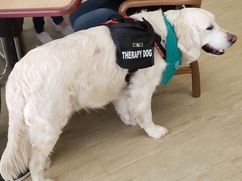 Arthur the Therapy Dog - Care & Rehab